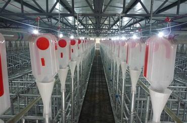自动化养殖1